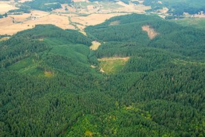 Tree Farm Arial
